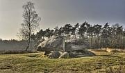 Hunebed D40, Emmerveld, Valtherbos, Emmen (Drenthe)