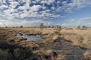 Fochteloërveen, hoogveen op de grens van Drenthe en Fryslân
