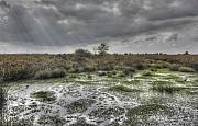 Veenmos op het Fochterloërveen (op de grens van Fryslân en Drenthe)