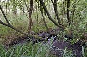 Moeras in de Weerribben (Overijssel, Nederland)