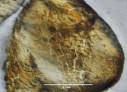 microscoopfoto zandkorrel met aangehecht ijzer - Hoogersmilde (Drenthe)